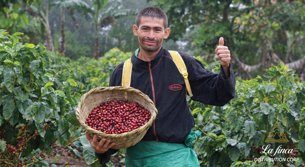 Coffee Picker in Nicaragua | La Finca Distribution Corp Specialty Coffee Importer based in North Vancouver, Canada