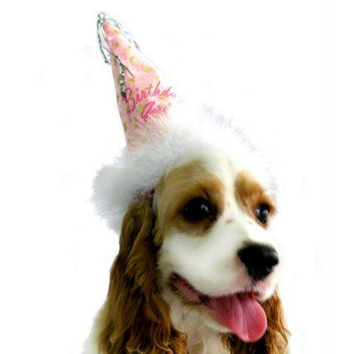 Birthday Girl Dog Hat - Bark Label
