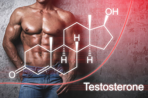 Muscular male body and testosterone hormone formula.