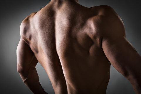Back of a young man with well trained body, triceps, lats and rhomboid muscle