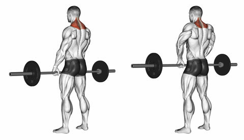 Shrugs with barbell