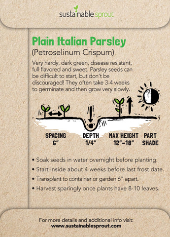 Italian Parsley Planting Instructions