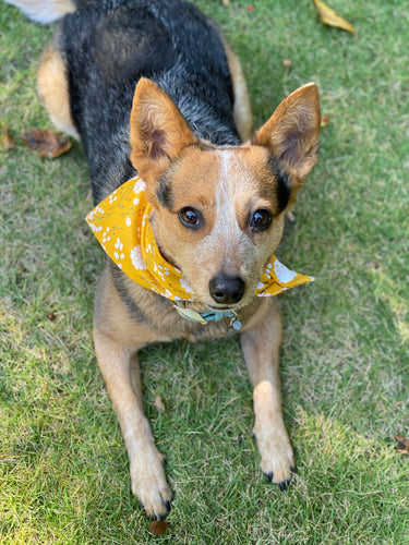 Tie On Fall Marigold Dog Bandana