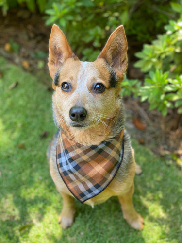 Furburry Flannel Tie on Dog Bandana