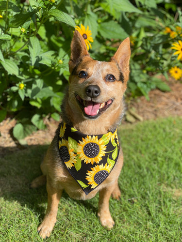 Tie on Sunflower 🌻 Dog Bandana