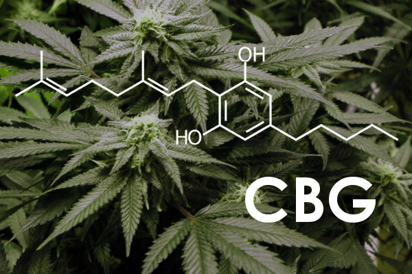 What is CBG and how does it compare to THC and CBD?