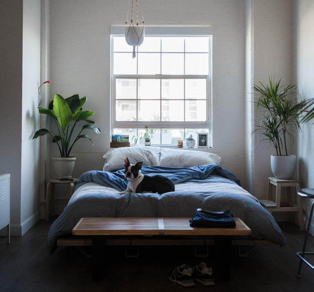 6 Indoor Plants That Will Spice Up Your Bedroom