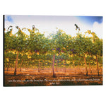 """I Am The Vine"" Israel Vineyard - 30x20 Large Wrapped Canvas Art"