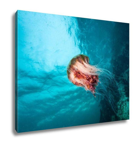 Gallery Wrapped Canvas, Jellyfish At British Columbia