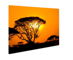 Metal Panel Print, African Sunset In Savannah