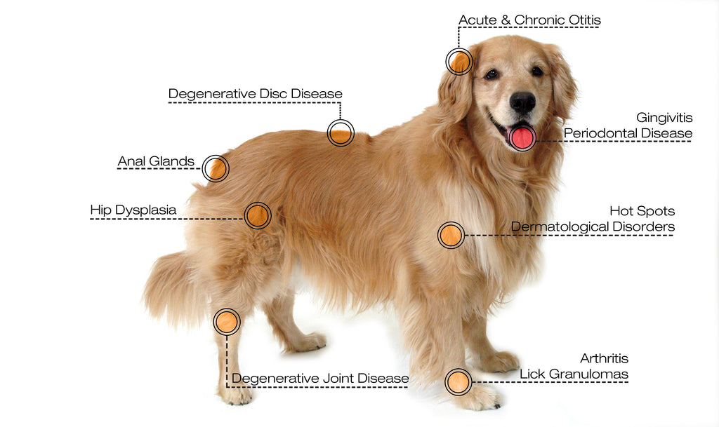 Cold Laser Therapy for Dog - Veterinary Laser Therapy Application
