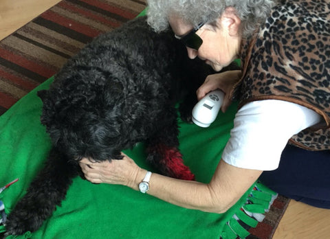 Laser Therapy for Dog