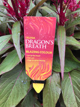 Celosia Dragons Breath 175mm