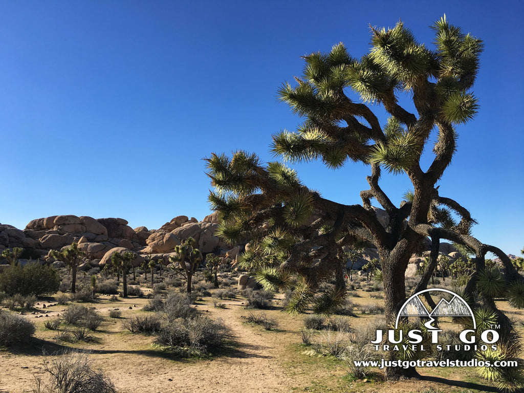 Just Go to Joshua Tree National Park – A Full Day of Hiking and Adventures