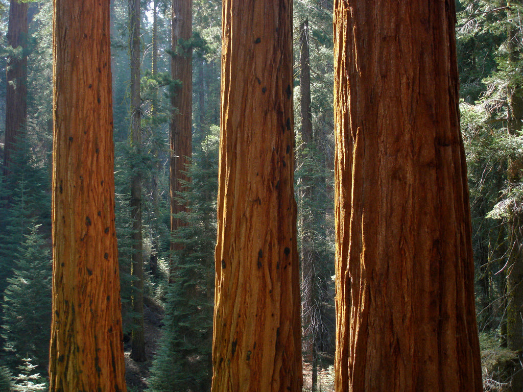 Just Go to Sequoia National Park - Campgrounds