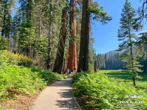 Sequoia National Park – What to See and Do