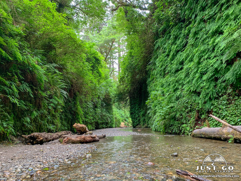 Just Go to Prairie Creek Redwoods State Park – Fern Canyon Trail