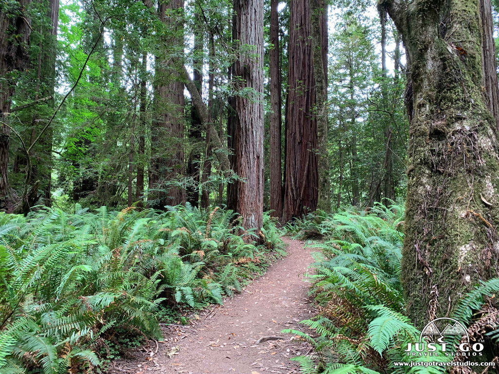 Just Go to Redwood National Park - Tall Trees Grove