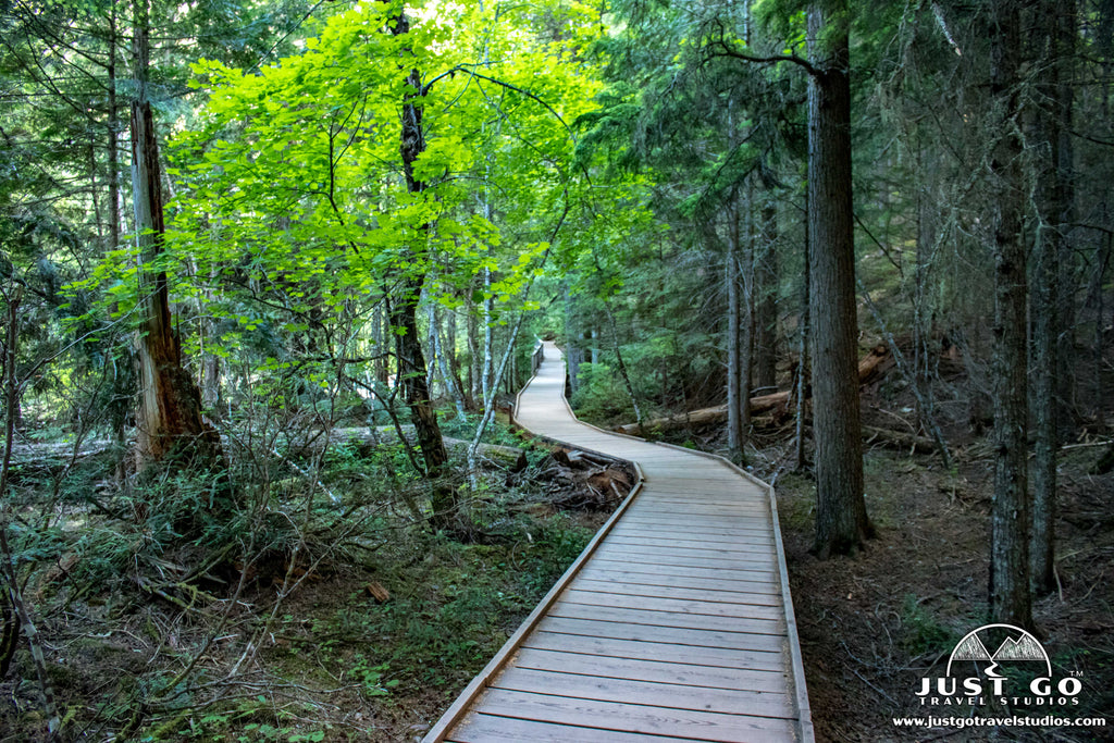 Just Go to Glacier National Park - Trail of the Cedars