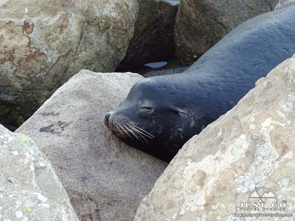 Seals in Monterey California