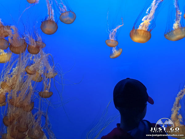 Jellyfish in Monterey