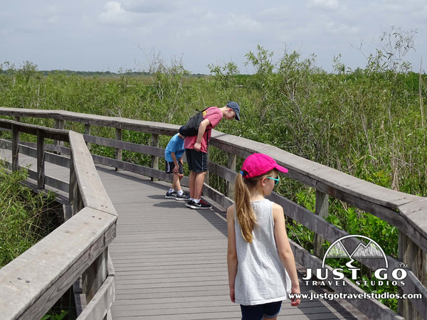 Raised boardwalks in Everglades National Park
