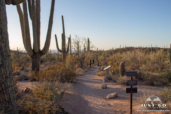 Valley View Overlook Trail in Saguaro National Park