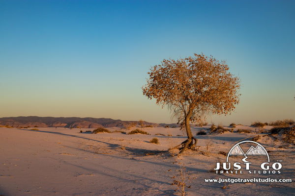 tree living in White Sands National Monument