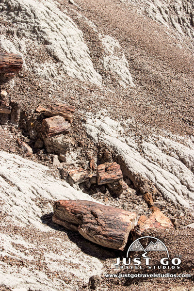 Petrified Wood in the Blue Mesa in Petrified Forest National Park