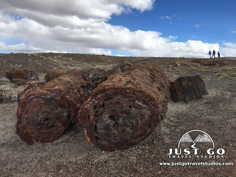 Fossil trees in Petrified Forest National Park