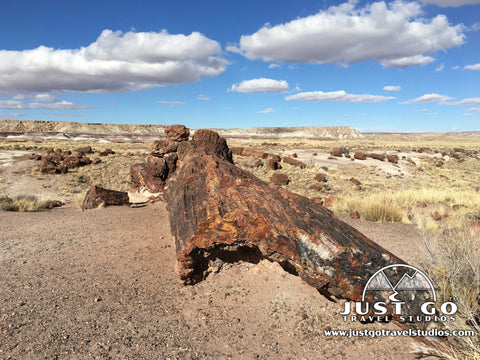 Giant logs trail in Petrified Forest National Park