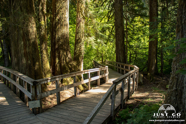 Boardwalk in the Grove of the Patriarchs Trail in Mount Rainier National Park
