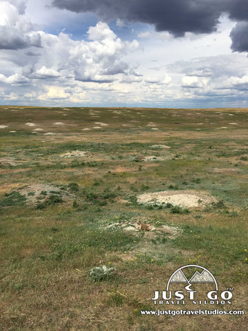 Prairie Dog Town in Theodore Roosevelt National Park