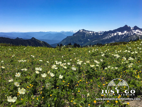 Wildflowers in Mount Rainier National Park