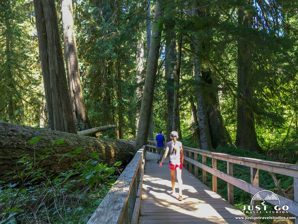 Grove of the Patriarchs Trail in Mount Rainier National Park
