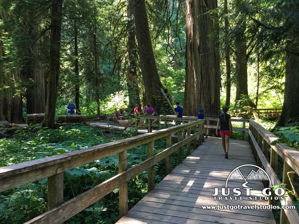 Walking on the Grove of the Patriarchs Trail in Mount Rainier