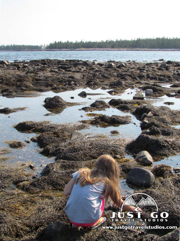 Exploring the tidepools in Southwest Harbor