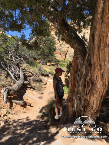 Finding shade on the hickman bridge trail in Capitol Reef National Park