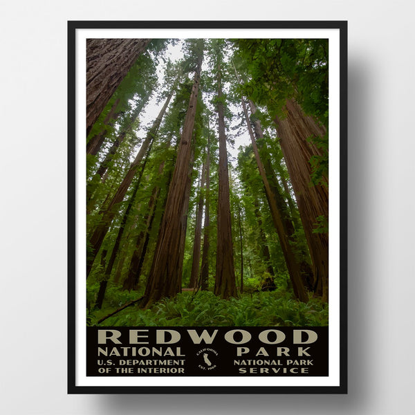 Redwood National Park Poster of Tall Trees (WPA Style)