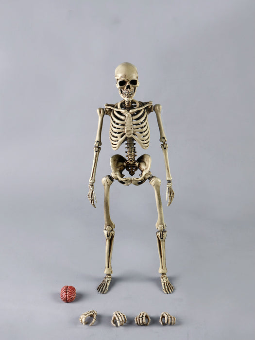 Pre-order COOMODEL 1/6 NOBS011 Skeleton Metal Body JP#4
