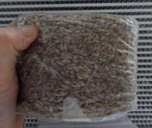 1 Pound Sterilized Rye Berries - Grain Spawn Organic