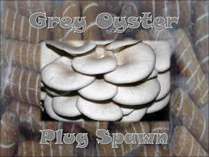 Grey Oyster Mushroom Super Charged Master ( G1 ) Plug Spawn 50 Count Bag Log Cultivation