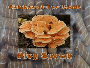 Chicken of the woods Mushroom Super Charged Master (G1) Plug Spawn 50 Count Log Cultivation
