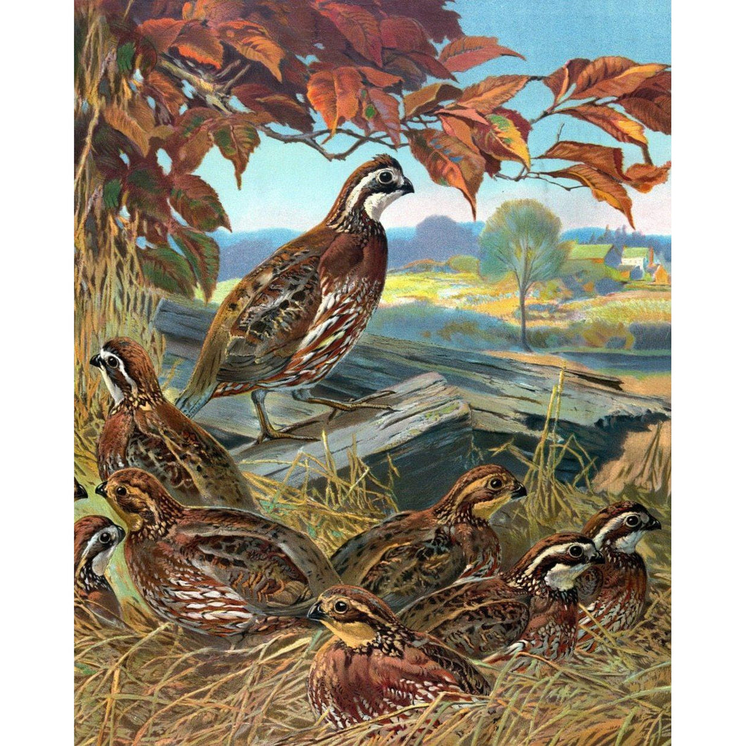 DIY Paint by Number kit for Adults on Canvas-Bevy of Quails-Clean PBN