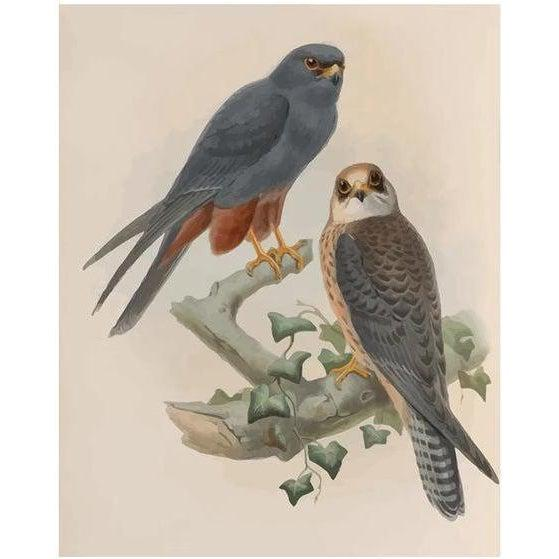 Birds Sharing a Branch - Paint by Numbers Kit