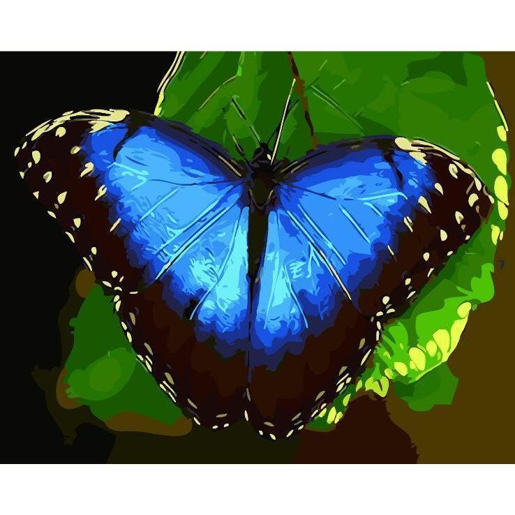 DIY Paint by Number kit for Adults on Canvas-Blue Butterfly-40x50cm (16x20inches)