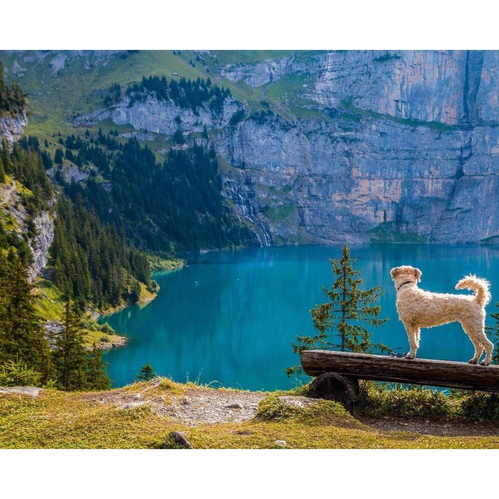 DIY Paint by Number kit for Adults on Canvas-Dog on the Blue Lake-Clean PBN