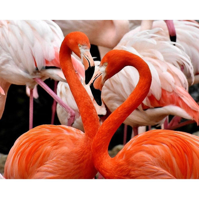 DIY Paint by Number kit for Adults on Canvas-Flamingo Love-Clean PBN