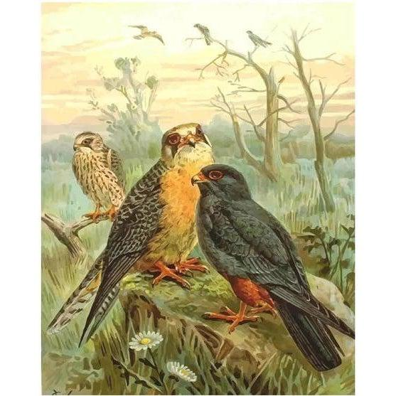 Flock of Falcons - Paint by Numbers Kit