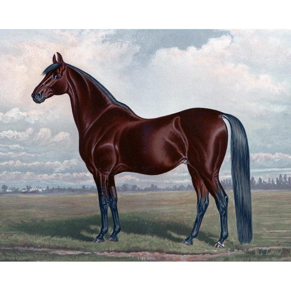 Grand Stallion - Paint by Numbers Kit